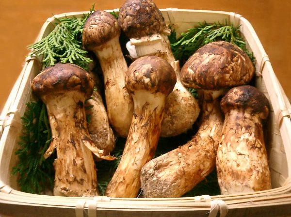 О грибах в подвале