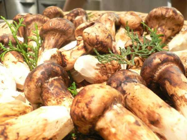 О грибах в подвале своего дома