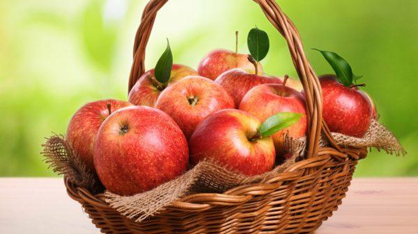 Хранение яблок на зиму в погребе