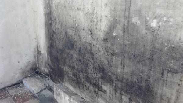 Грибки и заражения ими подвальных помещений