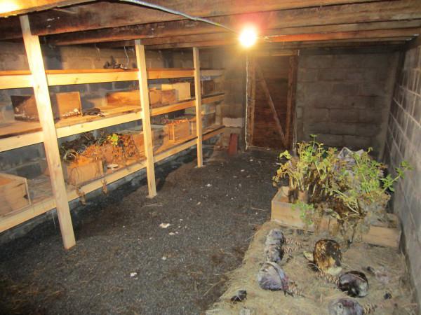 Какая температура должна быть в погребе для хранения овощей зимой?