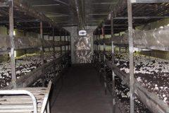 Теплица в подвале