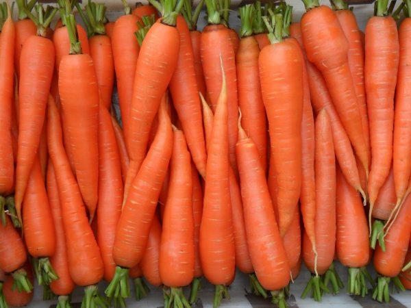 как хранить морковку в подвале на зиму