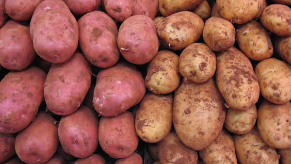 Как хранить в погребе картофель