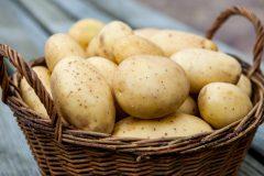 Как в погребе хранить картофель
