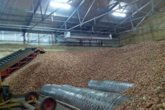 Овощехранилище лука