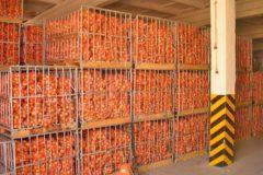 Хранение овощей в овощехранилищах