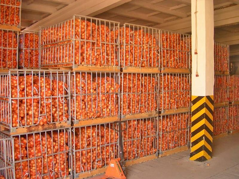Технология хранения корнеплодов, Качество корнеплодов при закладке, Технология хранения моркови