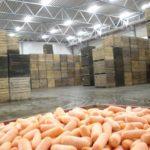 Хранение моркови в овощехранилище